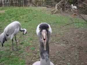 Vögel im Zoo