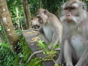Affen beim Essen